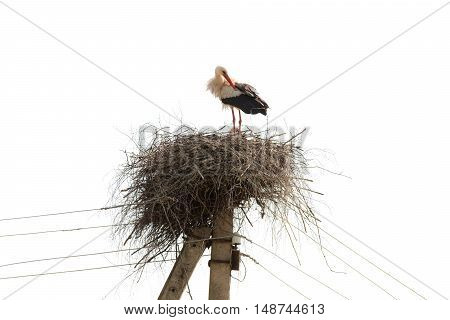 nest with a stork on electric pole isolated
