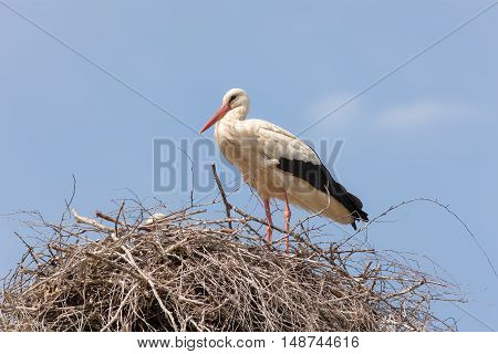 Two storks in the nest on the blue sky background