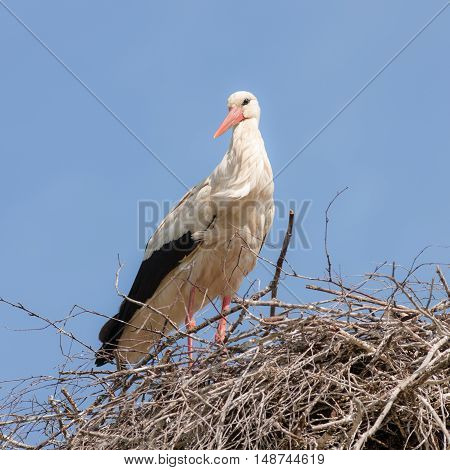 stork in the nest on the blue sky background