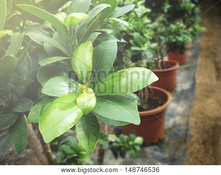 Hothouse plant. Autumn flower. Green Texture Foto.