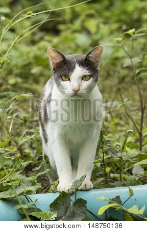 Image of a cat sat on nature background