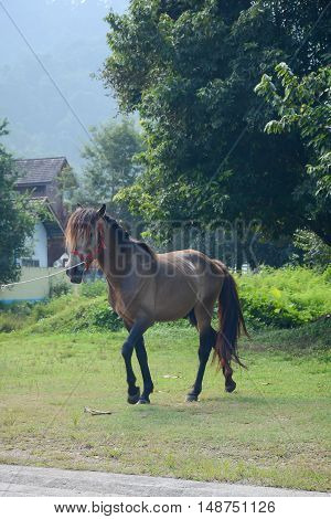 Soft focused of horse is walking on the grass with nature background