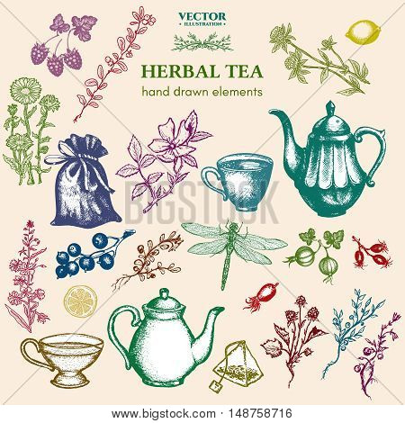 Herbal tea collection hand drawn decorative inking vintage sketch