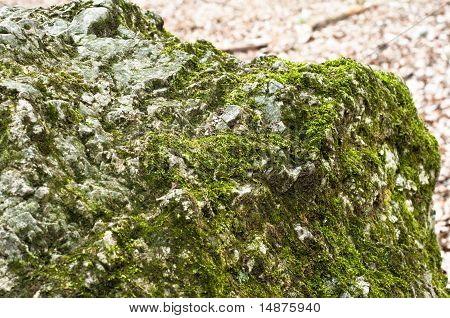 Bright Green Moss On Rock In Forest