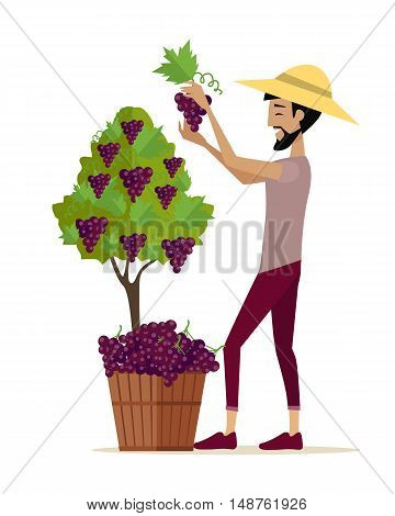 Man picking grape during wine harvest. Harvesting icon.