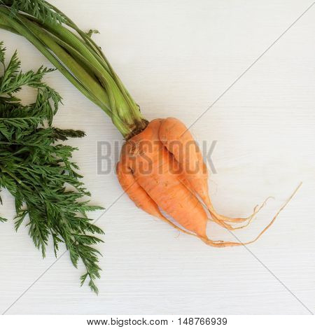 Orange twisted carrots with green leaves / strange twisted vegetable