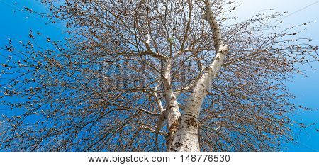 Roots in blue sky. Tree crown on blue sky background