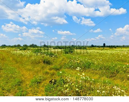 Wide green meadow with grass and trees
