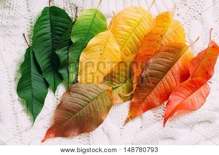 colorful autumn leaves on knitted winter clothes