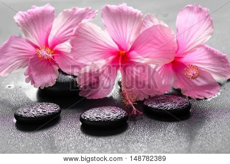 Beautiful Spa Background Of Pink Hibiscus Flowers On Zen Basalt Stone With Drops, Closeup