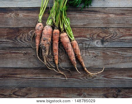 Bunch of orange carrots fresh with dirt on old rustic wood background