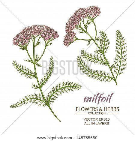 milfoil flowers vector set on white background