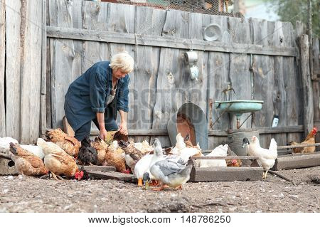 woman farmer feeds the chickens and geese