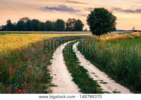 Summer landscape with country floral road between fields. Masuria Poland.