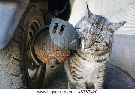 cat and old motorcycle exhaust pipes .