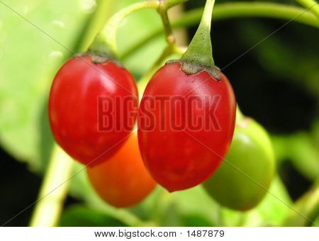 Fruit On The Vine