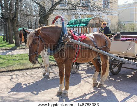 St. Petersburg, Russia - 3 May, Pulled by horse to the wagon, 3 May, 2016. People and spring landscape in Pavlovsk park.