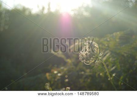 El reflejo del sol en la flor solitaria