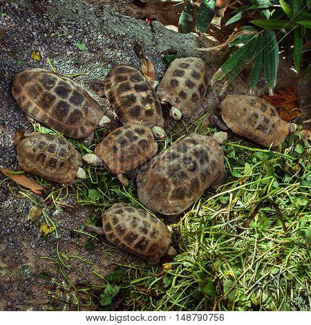 Family Of Tortoises