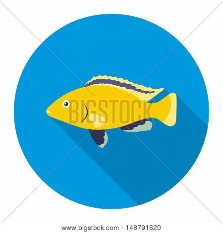 Cichlid hummingbird fish icon flat. Singe aquarium fish icon from the sea, ocean life flat.