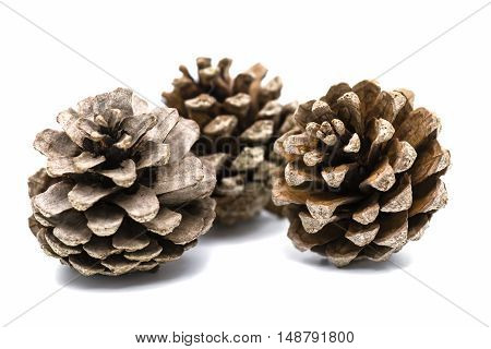 three brown pine cone with white background .