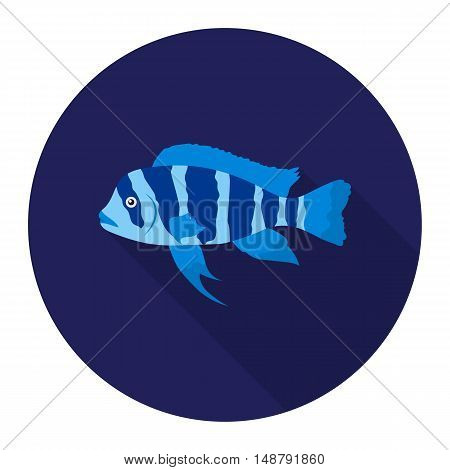 Frontosa Cichlid Cyphotilapia Frontosa fish icon flat. Singe aquarium fish icon from the sea, ocean life flat.