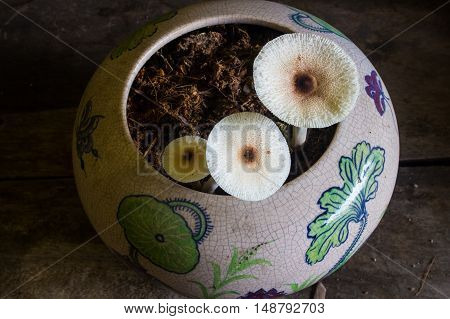 The Mushroom  nature  in the table garden