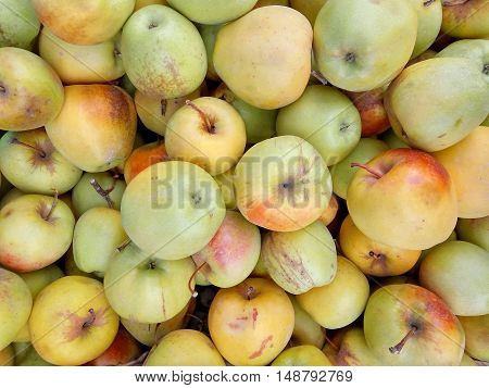 Lots of Green Yellow ripe apples background