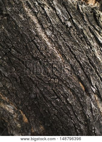 closeup shot of old tree bark texture background
