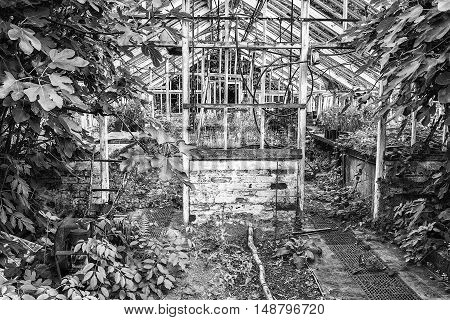 Stunning Vintage Victorian Era Greenhouse Left Ro Ruin In Old English Garden In Black And White
