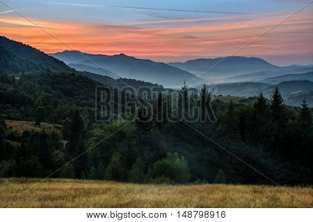 Coniferous Forest On A Steep Mountain Slope In Evening