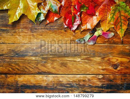 bright wet autumn maple leaves on wooden plank table top border