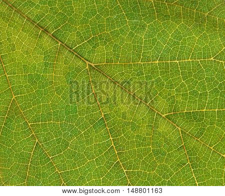 Macro photo shows a delicate pattern from a leaf