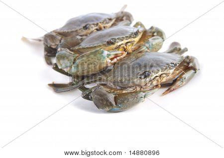 Photo Of Crab