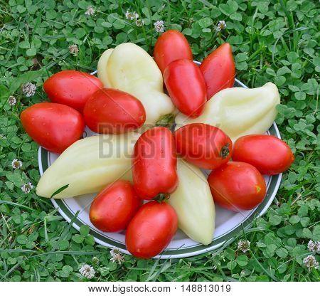 bowl of vegetable southern Bohemia Czech Republic