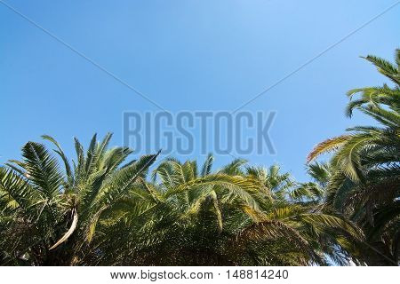Lush Green Palm Trees And Blue Sky