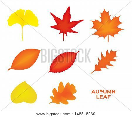 autumn leaves set, isolated on white background. simple cartoon flat style, vector illustration. icon