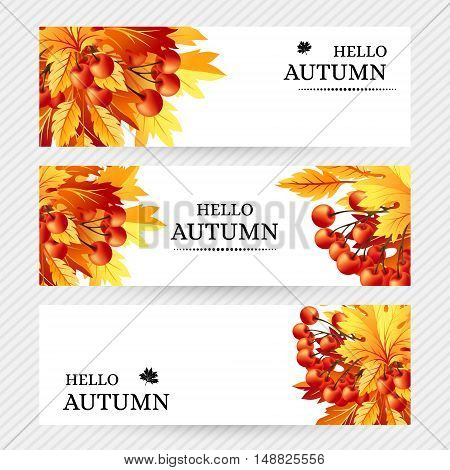 Autumn background with fall maple tree leaves and rowanberry. Horizontal vector banners with season foliage decorations and copy space