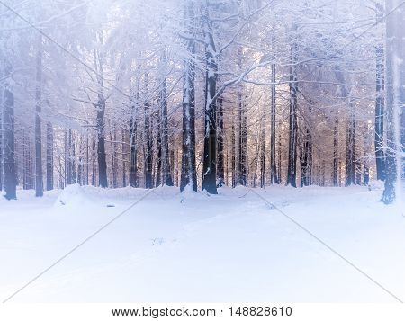 Misty and dreamy forest in winter weather