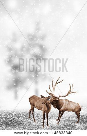 forest in the frost. Winter landscape. deer
