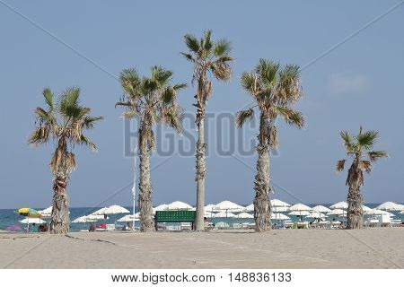 beach landscape with palm trees on foreground in san juan beach alicante-spain