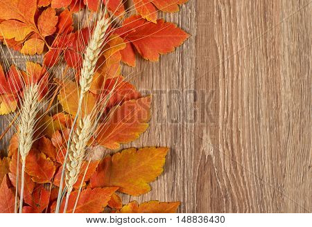 autumn red leaves and wheat spike on wood background, nature season concept and object