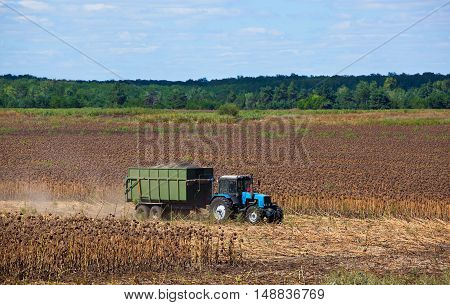 Big blue tractor rides through the field with a trailer loaded with sunflower seeds. Autumn harvest.