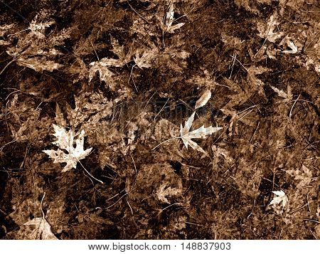 Abstract Autumn background with fallen flying leaves in sepia