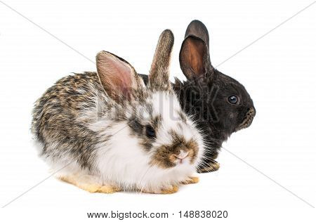 little fluffy rabbits on a white background