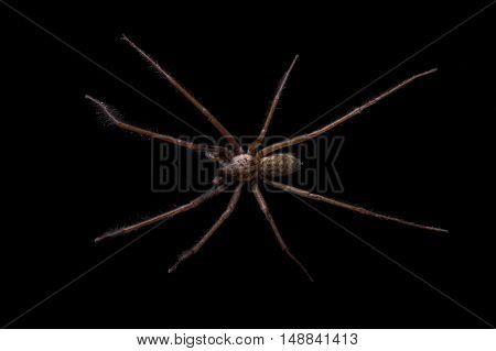 Brown Spider On A Black Background