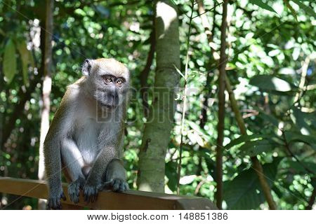 A sad looking long tailed monkey alone in the forest