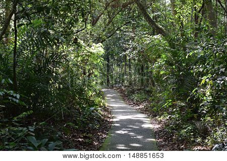 Path winds through a lush green tropical rainforest