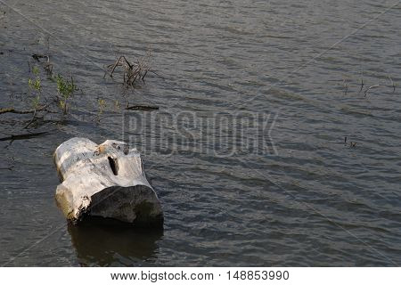 Background of log floating in a pond
