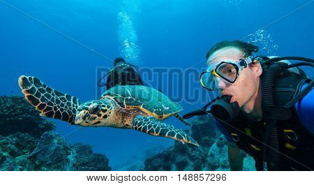 Scuba divers with Hawksbill turtle flowing in coral reef